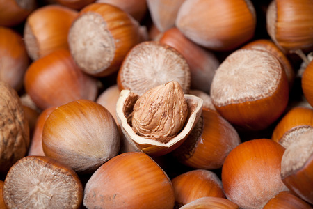 nutshell: one dried cracked hazelnut inside nutshell