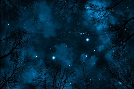 cloudy sky: spooky low angle view through trees up to starry night sky with blue nebula, Stock Photo