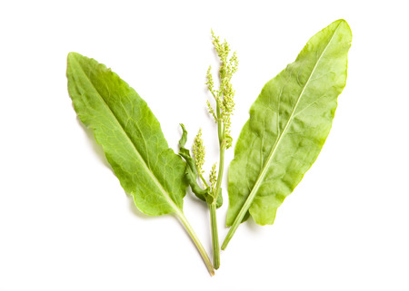raw sorrel leaf with blossom on white background,