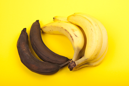putrefied: two rotten bananas and bunch of ripe bananas on yellow background