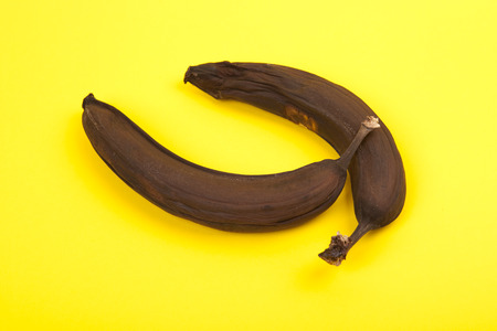 putrefied: two black rotten bananas on yellow background