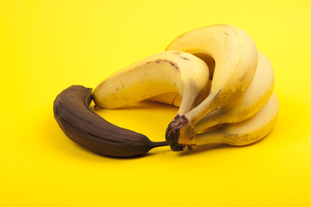 putrefied: black rotten banana beside bunch of ripe bananas on yellow background