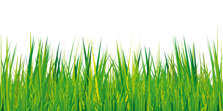 copyspace: green grass texture on white background with copy-space,