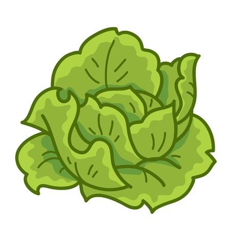흰색 배경에 녹색 양배추 만화 고립 된 그림