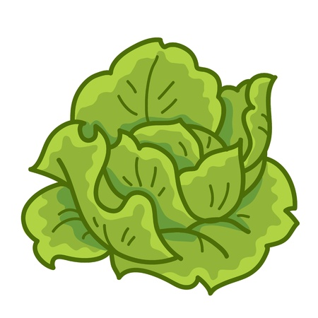 green cabbage cartoon isolated  illustration on white background