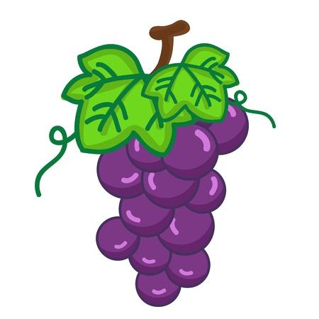 fruit Grapes isolated illustration on white background