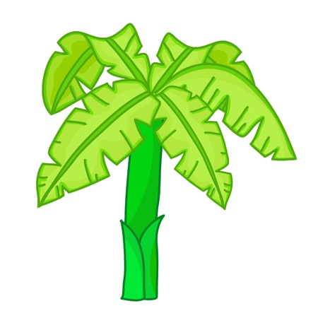 Banana tree isolated illustration on white background