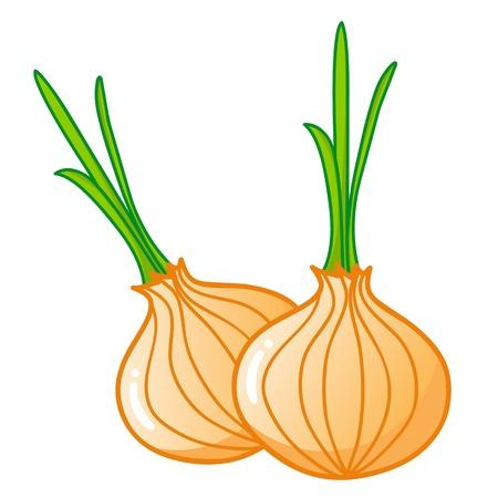 onions isolated illustration on white background