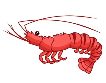 Shrimp isolated illustration on white background