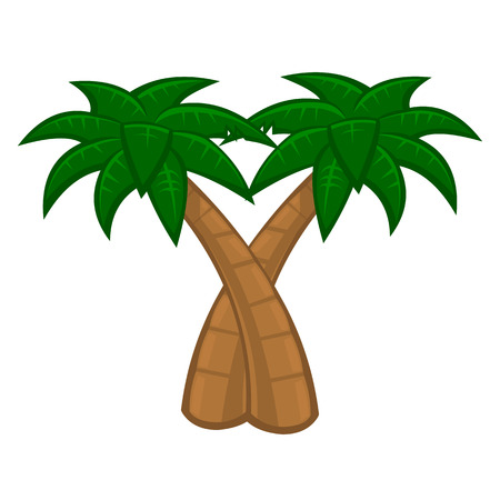 Coconut palm tree on white background Vector