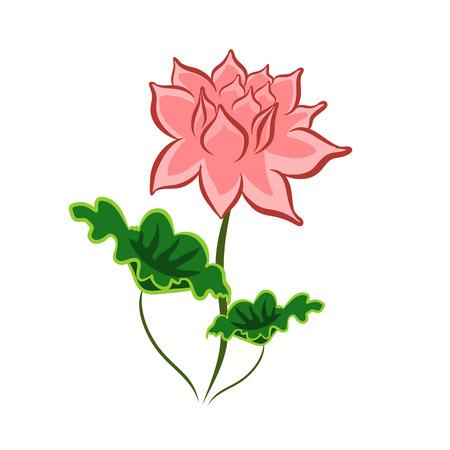 flor aislada: aislado Ilustraci�n de la flor de loto en el fondo blanco