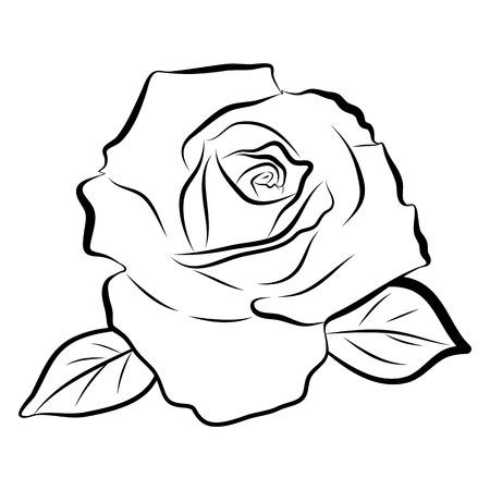 lijntekening: Schets lijntekening van roos geïsoleerde illustratie op witte achtergrond