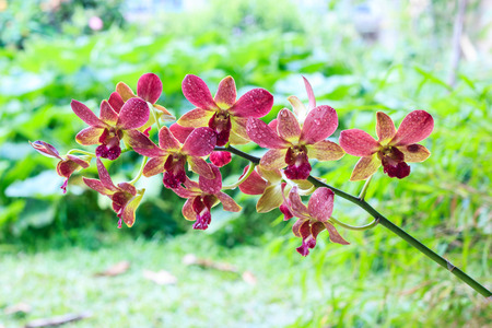 yellow orchid: purple and yellow orchid
