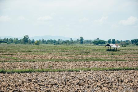 subsistence: rice field