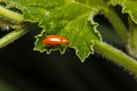 insect on leaf: insect on green leaf