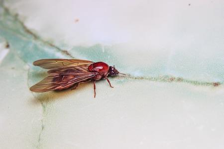 subterranean: The subterranean ants