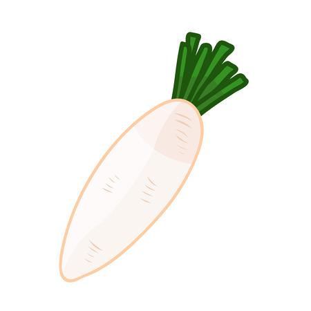 vegatables: White radish isolated illustration on white background