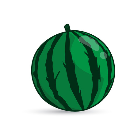 gourds: Watermelon Fruit isolated illustration on white background