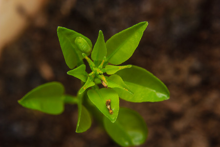 bisected: plant full of pest