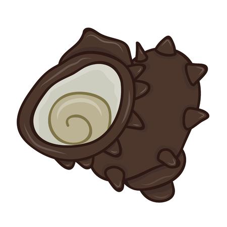 shellfish: Sazae shellfish isolated illustration on white background