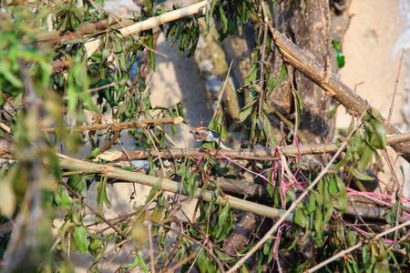 anuran: small snake eats a small frog