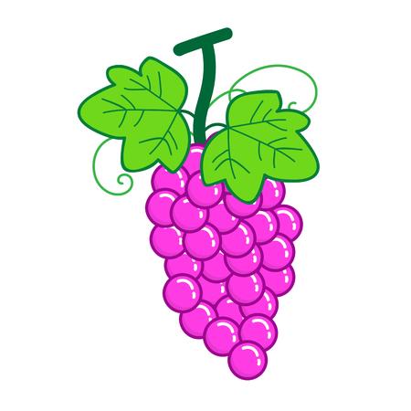 bunches: fruit Grape isolated illustration on white background