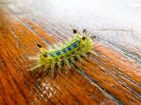 caterpillar worm on wood Stock Photo