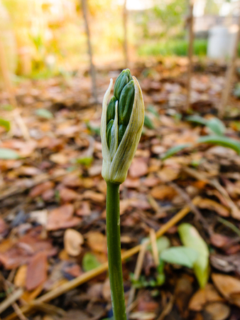 close up of flower bud in garden Stock Photo