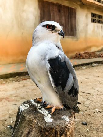 Portrait of falcon bird