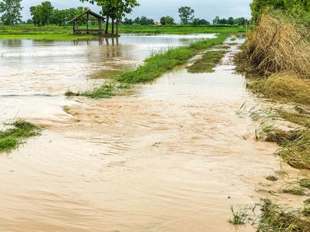 Agricultura El campo de arroz inundó los daños después de una fuerte lluvia
