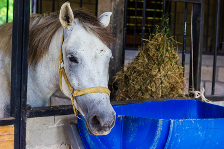 grey horse in stable