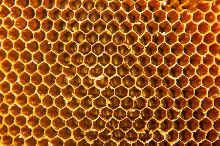 z bliska domu pszczół o strukturze plastra miodu