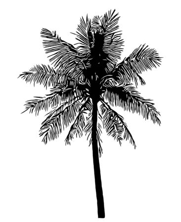coconut palm tree silhouette on white background