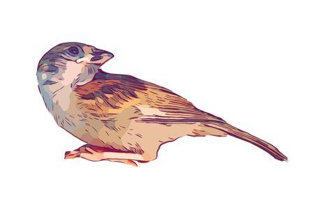Bird hand drawn isolated illustration on white background