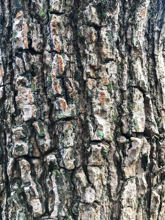 Tree bark texture background. Natural background