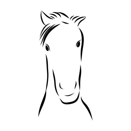 Sketch line of a horse on a white background Illustration
