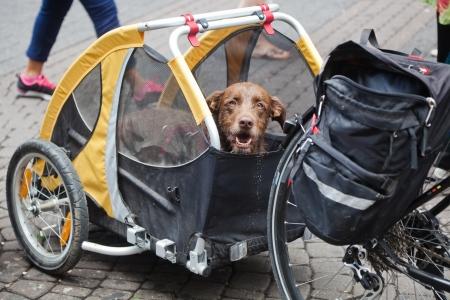 自転車トレーラーの犬