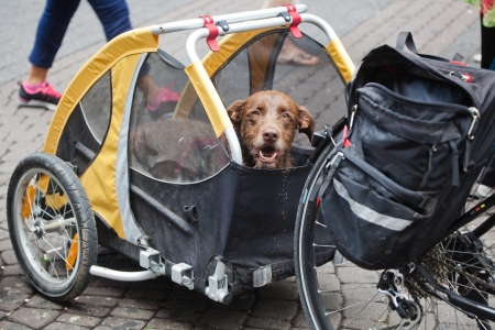 dog in a bicycle trailer