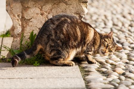 scrubbing: cute cat street scrubbing its neck
