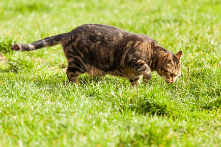 observing: cute cat observing the meadow