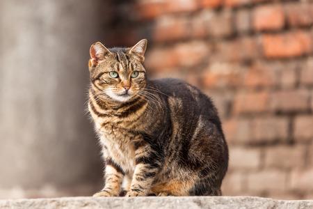 stray: Cute Stray Cat