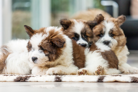 cuddly baby: group of cute puppies Elo Stock Photo
