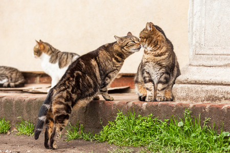 sniffing: cute stray cats sniffing eachother