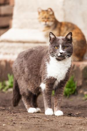 stray: cute stray cats