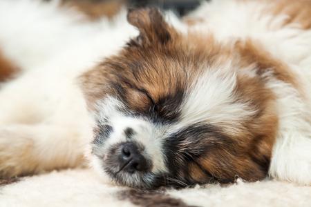 cuddly baby: Sleeping puppy