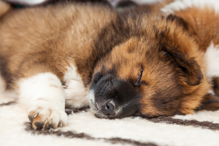 cuddly baby: Elo puppy Stock Photo
