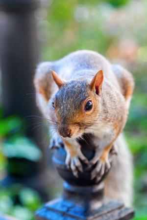 fencepost: cute squirrel sitting on a fencepost