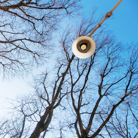 low angles: low angle view of a leafless tree and a street lamp Stock Photo