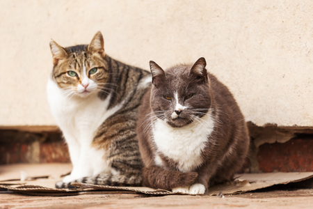 stray: two stray cats sitting together