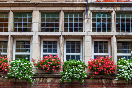 historical building: window with flowers of a historical building in Ghent, Belgium Stock Photo